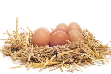 chicken nest: a pile of brown eggs in a nest on a white background