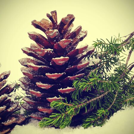 pine cones on the snow with a retro effect photo