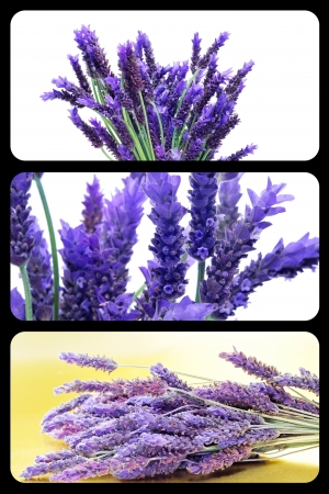 a collage of three pictures of lavender photo