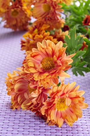 some orange gerbera daisies on a violet woven background photo