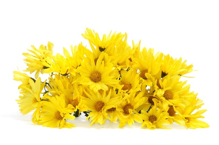 close up of a bunch of yellow daisies on a white background Stock Photo - 16823618