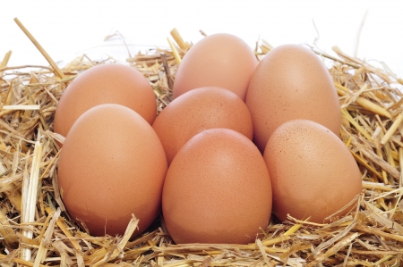 henhouse: closeup of a pile of brown eggs in a nest