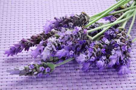 some lavender flowers on a purple woven background photo