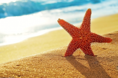 closeup of a seastar on a white sand beach photo