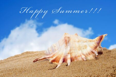 a conch on the sand of a beach and the sentence happy summer Stock Photo - 17795277