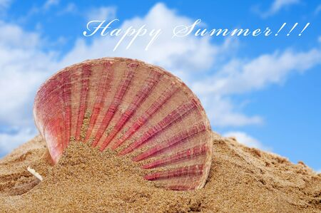 scallop: seashell on the sand of a beach and the sentence happy summer