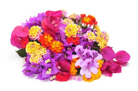 a bunch of different flowers, such as verbenas, bougainvillea and violets on a white background photo