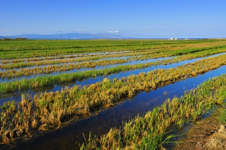 view of a paddy field in Delta del Ebre, in Catalonia, Spain Stock Photo - 18126892
