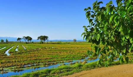 view of a paddy field in Delta del Ebre, in Catalonia, Spain Stock Photo - 18126891
