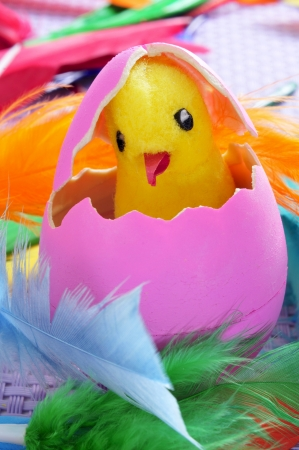 a teddy chick emerging from a hatched pink easter egg, and feathers of different colors photo
