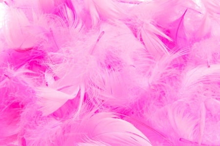closeup of a pile of soft pink feathers photo