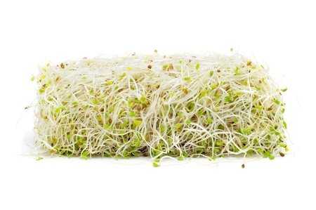 sprouting: a pile of alfalfa sprouts on a white background
