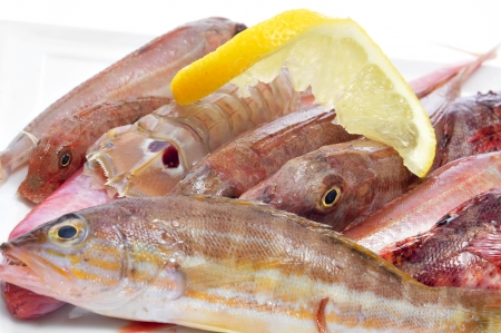 goby: closeup of a pile of different raw fishes from the mediterranean sea on a white background Stock Photo