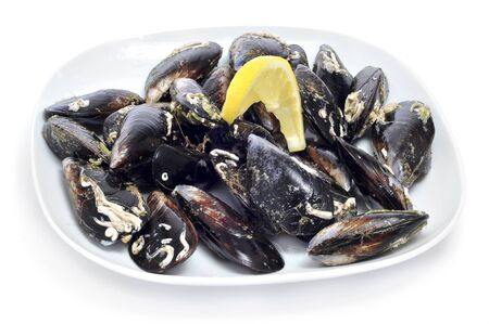 a plate with uncooked mussels on a white background photo