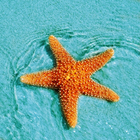 closeup of a seastar in a tropical beach photo