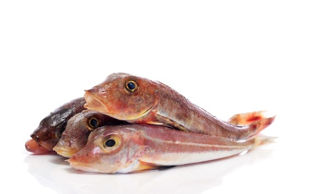 goatfish: some surmullets or striped red mullets on a white background Stock Photo