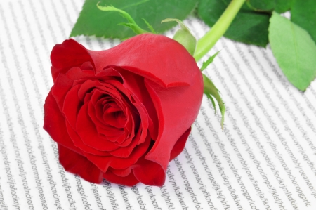 sant: a red rose and a book, a tradition for Saint Georges Day in Catalonia, Spain Stock Photo