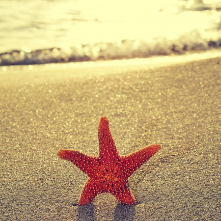 five objects: seastar on the shore of a beach at sunset