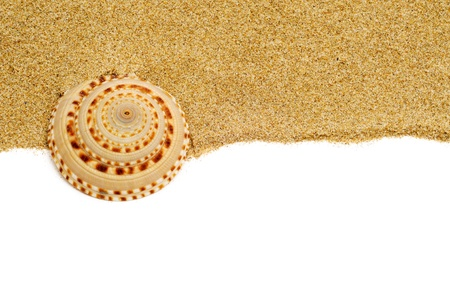 conch: closeup of a seashells on the sand, on a white background Stock Photo