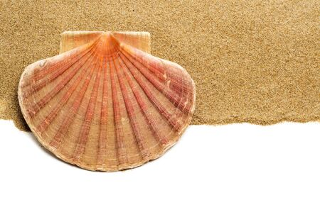 closeup of a scallop shell on the sand, on a white background with a blank space to write your text photo