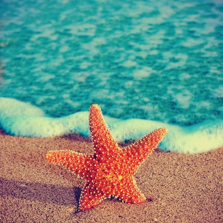 closeup of a starfish on the sand of a beach, with a retro effect photo