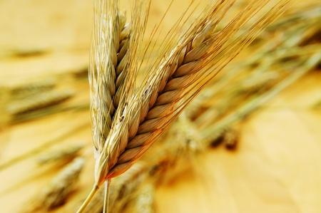 common market: closeup of some ripe wheat ears Stock Photo