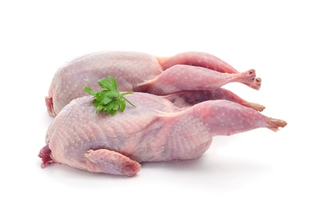 plucked: some plucked quails ready for cooking on a white background