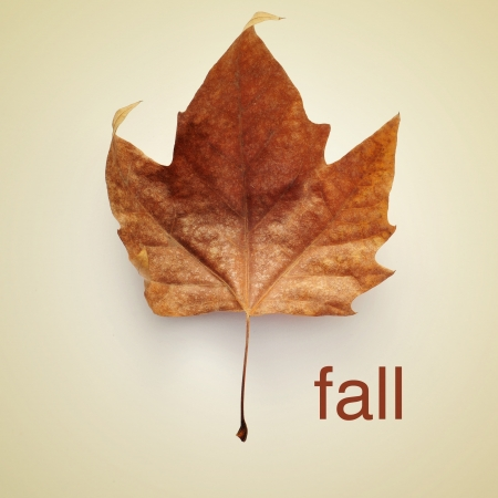 picture of a dried leaf and the word fall with a retro effect photo