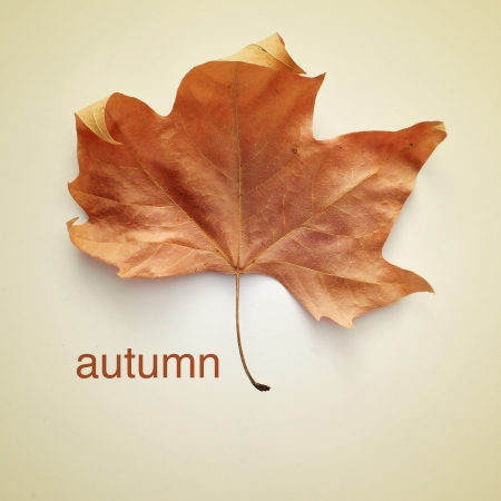 dried leaf: picture of a dried leaf and the word autumn with a retro effect