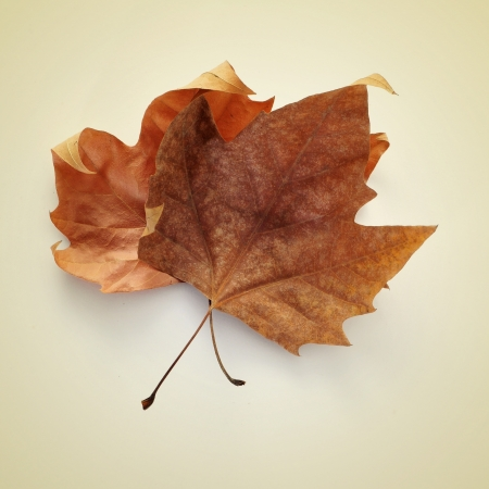 picture of some dried autumn leaves on a beige background with a retro effect photo