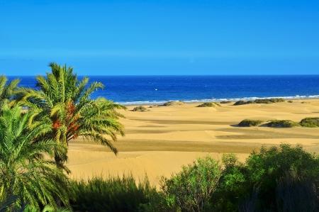 自然保護区の砂丘のマスパロマス、グラン カナリア島、カナリア諸島スペインでのビュー