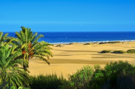 a view of the Natural Reserve of Dunes of Maspalomas, in Gran Canaria, Canary Islands, Spain Stok Fotoğraf