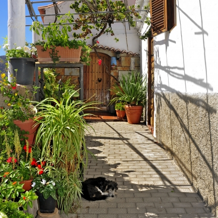 canaria: view of a picturesque street in Fataga, Gran Canaria, Canary Islands, Spain