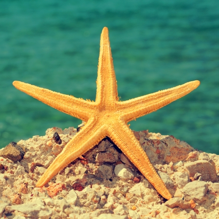 picture of a starfish on a rock of a beach, with a retro effect photo