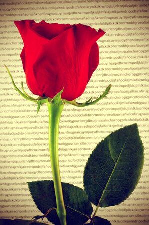 a red rose and a book, a tradition for Saint Georges Day in Catalonia, Spain Stock Photo