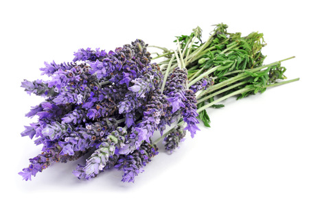 lavandula: a bunch of lavender flowers on a white background Stock Photo