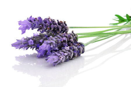 botanical remedy: some lavender flowers on a white background