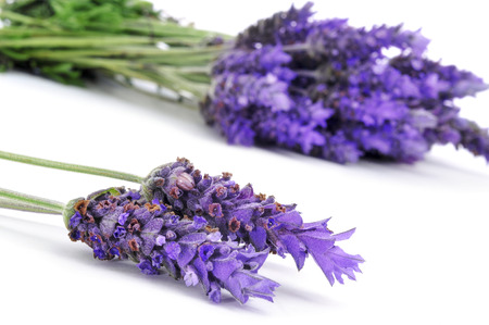 a pile of lavender flowers on a white background photo