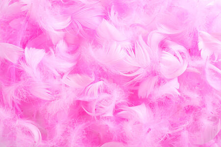 silken: closeup of a pile of soft pink feathers