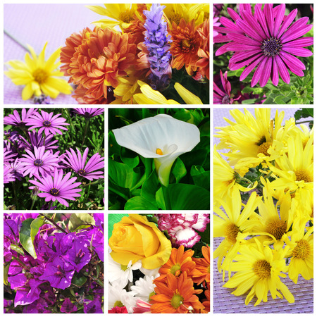 a collage of pictures of different flowers photo