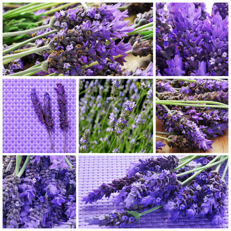 a collage with different picture of lavender flowers photo