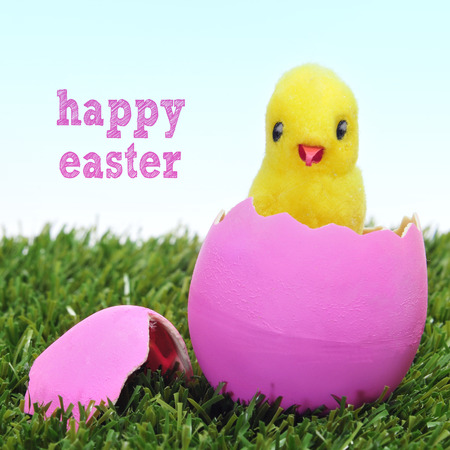a teddy chick emerging from a hatched pink easter egg on the grass and sentence happy easter photo