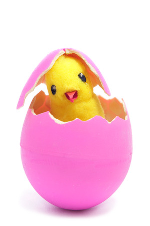 a teddy chick emerging from a hatched pink easter egg on a white background photo
