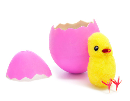 a teddy chick emerged from a hatched pink easter egg on a white background photo