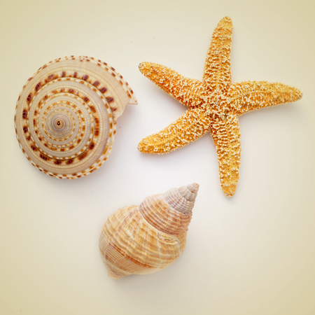some seashells and a starfish on a beige background, with a retro effect photo