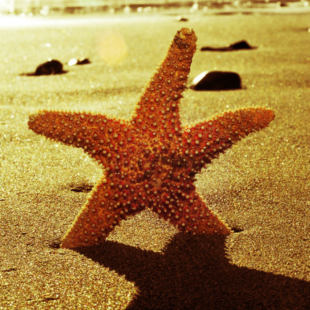 a seastar in the shore of the sea with a retro effect photo