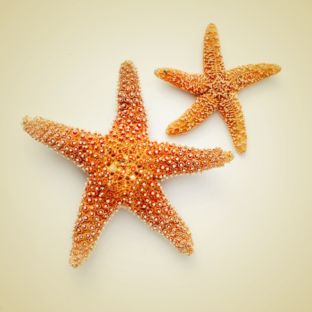 some starfishes on a beige background, with a retro effect photo