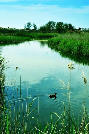 els: a duck in a pond in Els Muntanyans natural park in Torredembarra, Spain, with a retro effect