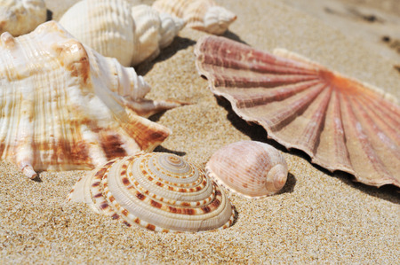 chilling out: closeup of some seashells on the sand of a beach
