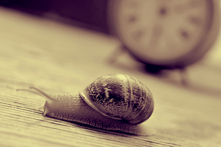 poky: a land snail and an old desktop clock on a wooden table, in sepia tone Stock Photo